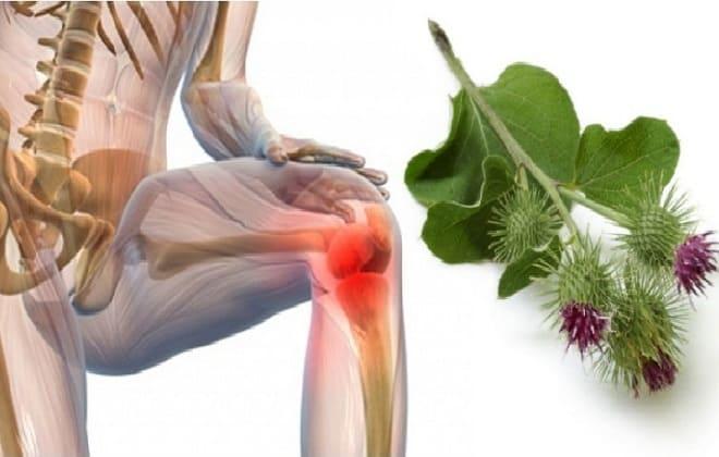Лечение суставов травами