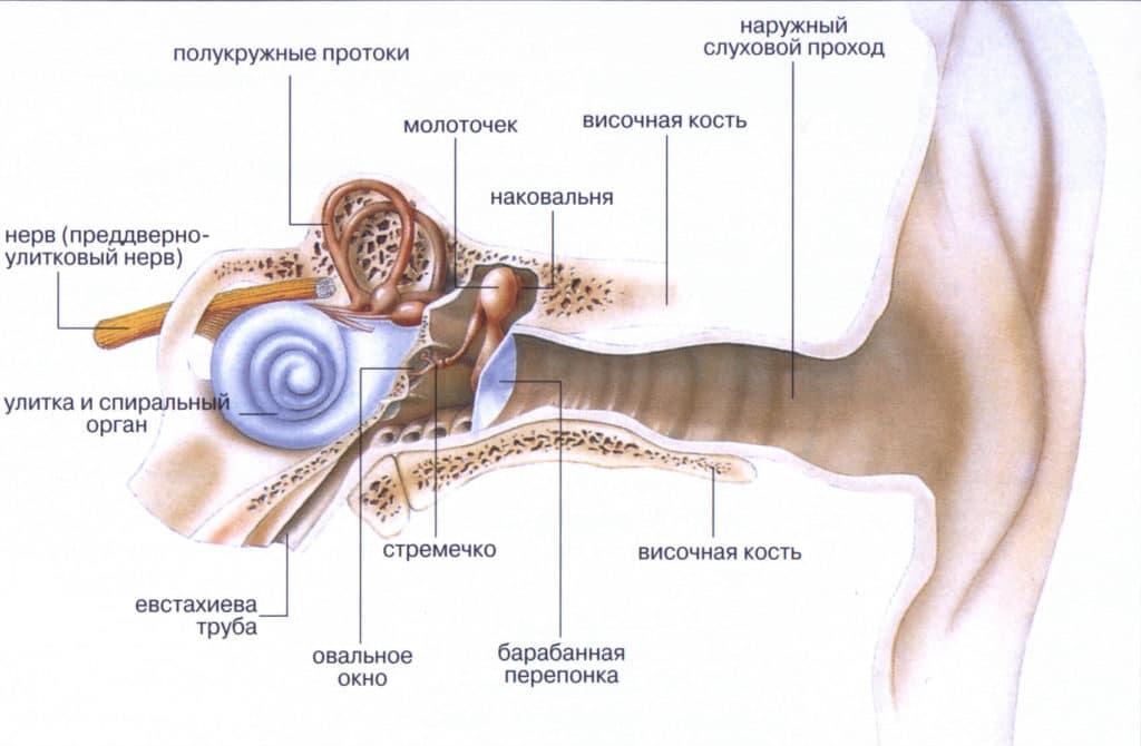 Слуховой аппарат человека